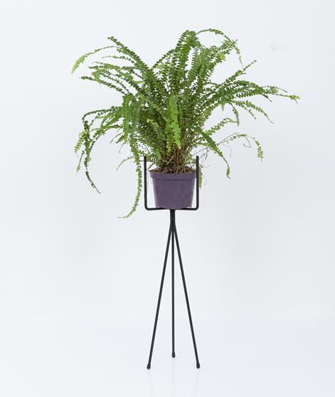 FERM Pflanzenständer klein