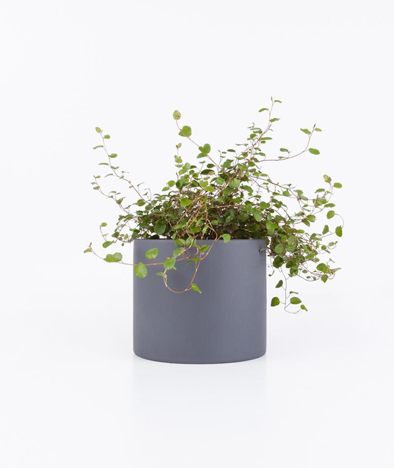 FERM Collect Blumentopf grau