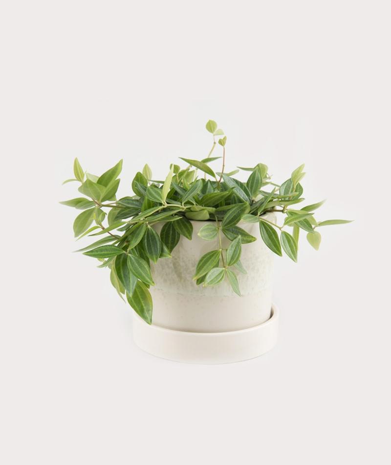 BLOOMINGVILLE Paula Flowerpot w/saucer