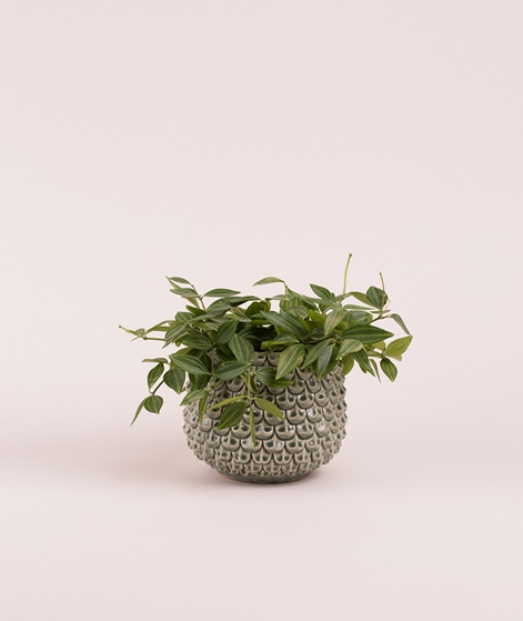 BLOOMINGVILLE Flowerpot green