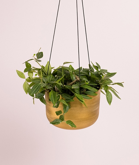 LIV INTERIOR Hanging Planter brass fin