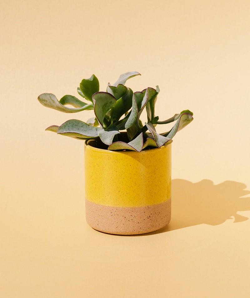 MADAM STOLTZ Two tone flower pot yellow